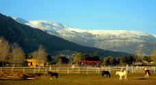 Hípica Doñana